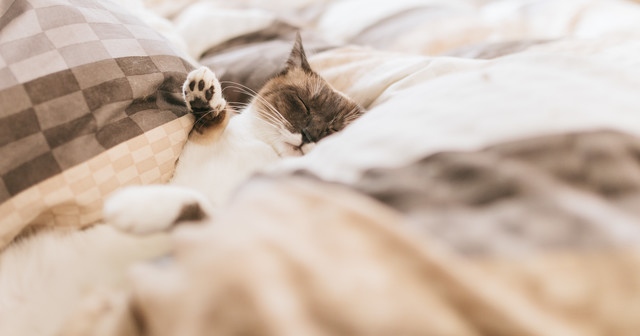 睡眠時間について